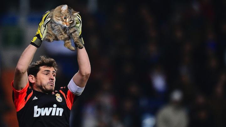 Porteros chopeados con gatos en lugar de balones: el post que estabas esperando