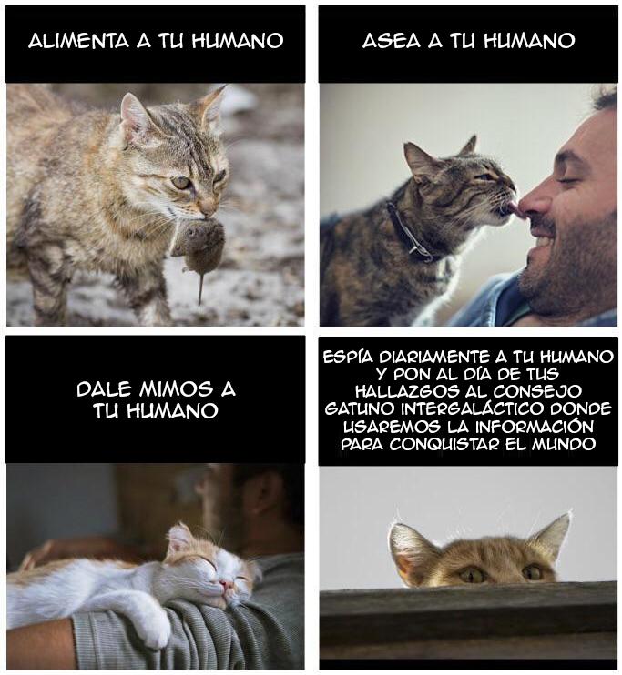 Cómo ser un buen gato
