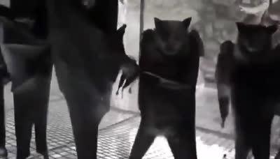 Si le das la vuelta a una cámara en una jaula de murciélagos, parece un after   a las 10 de la mañana