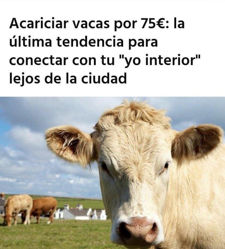El OnIyFans de los ganaderos.
