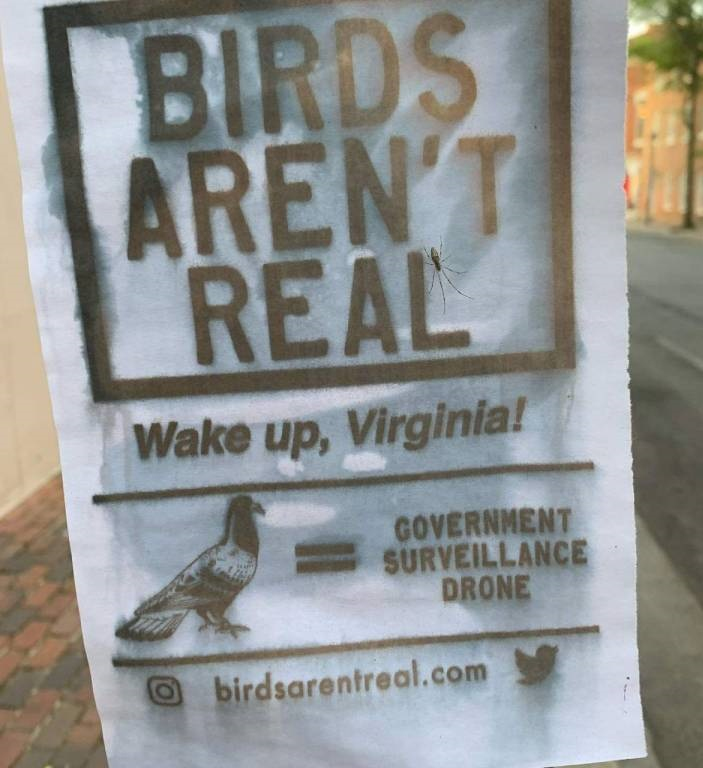 """""""Los pájaros no son reales. ¡Despierta Virginia! Las palomas son drones de vigilancia del gobierno"""""""