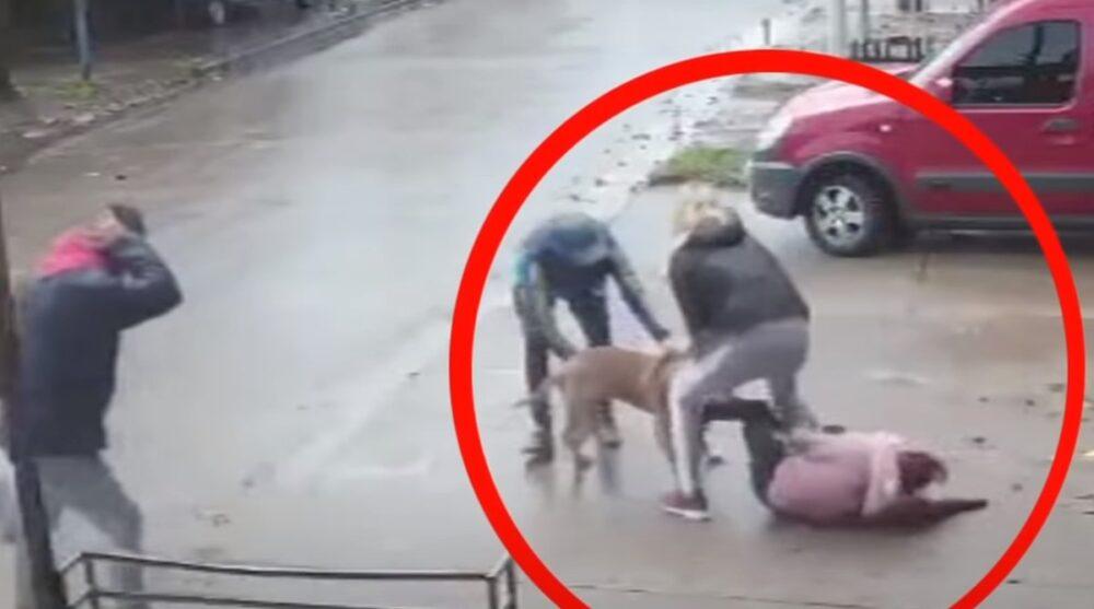Un pitbull ataca a una niña de 7 años en Argentina