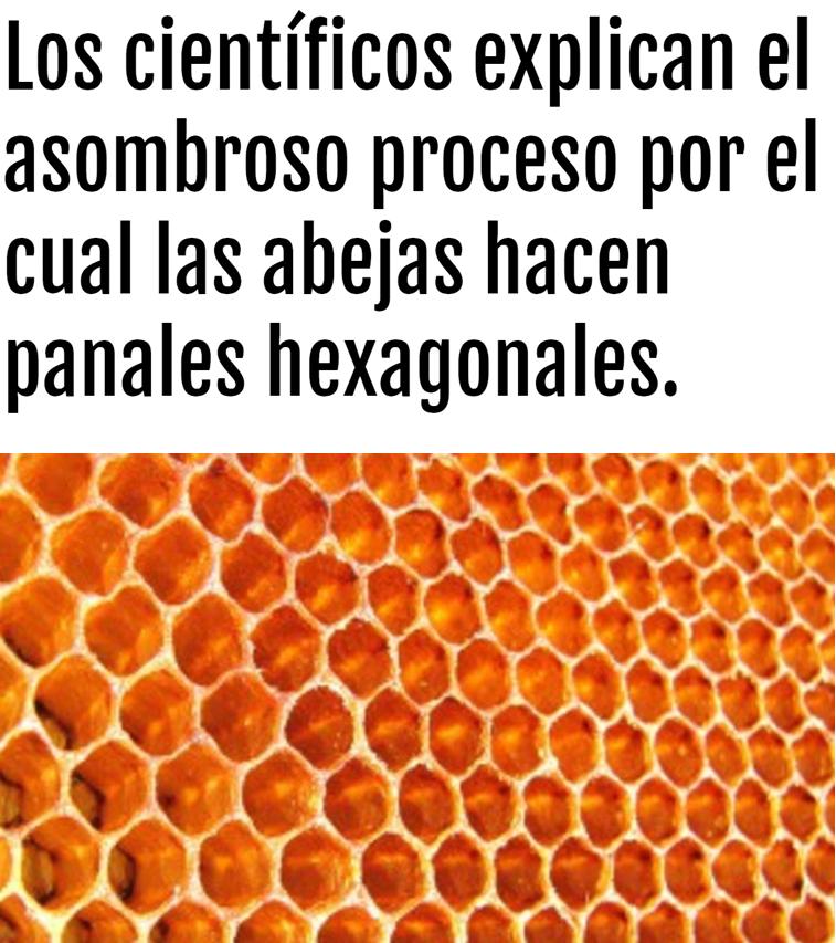 ¿Cómo construyen las abejas esas estructuras hexagonales tan perfectas?