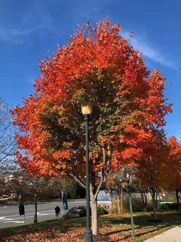 La farola cambió de estación una parte del árbol