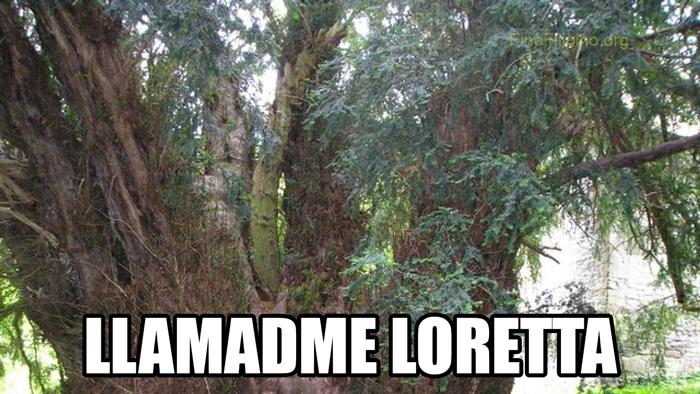 "Ahora le llaman ""árbol Paul McCartney"""