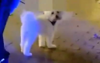 Espera... ¿han pixelado al perro?