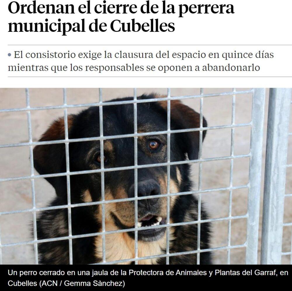 Muchos perretes van a necesitar un hogar tras el inminente cierre de una protectora de animales
