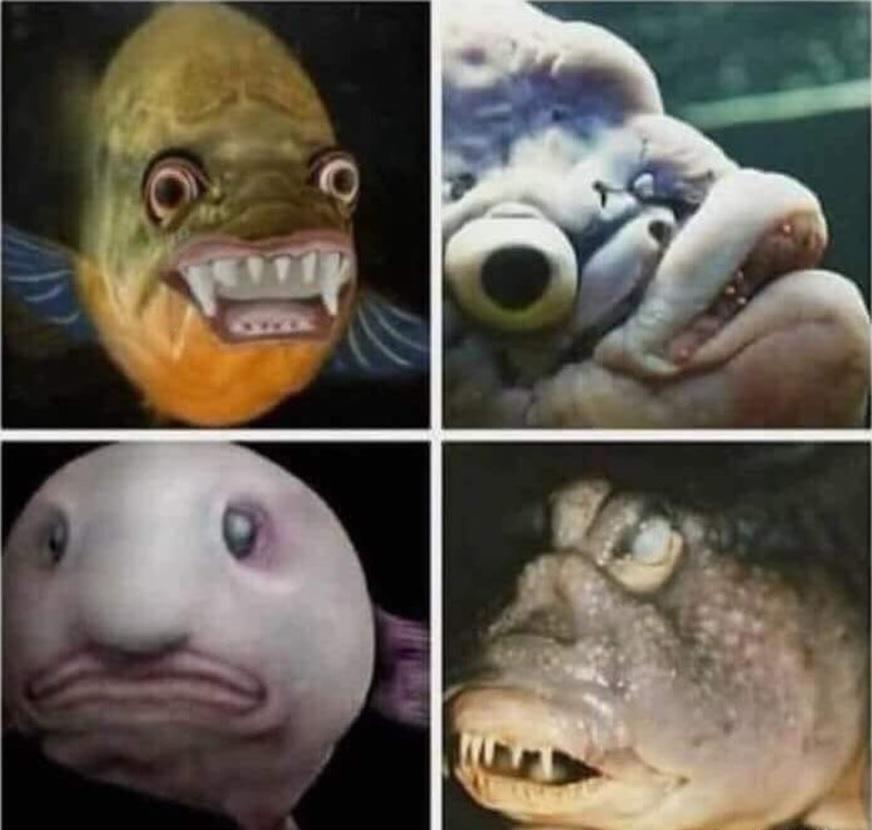 Cuando eres soltero y todo el mundo te dice que hay muchos peces en el mar, y tú eres así: