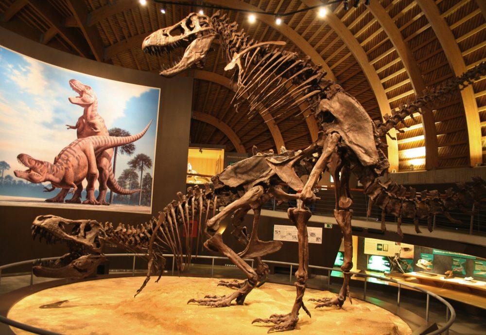 El Museo Jurásico de Asturias en España tiene una exhibición con dos modelos de esqueletos de T-Rex exhibidos en lo que los paleontólogos creen que sería su posición de apareamiento preferida.