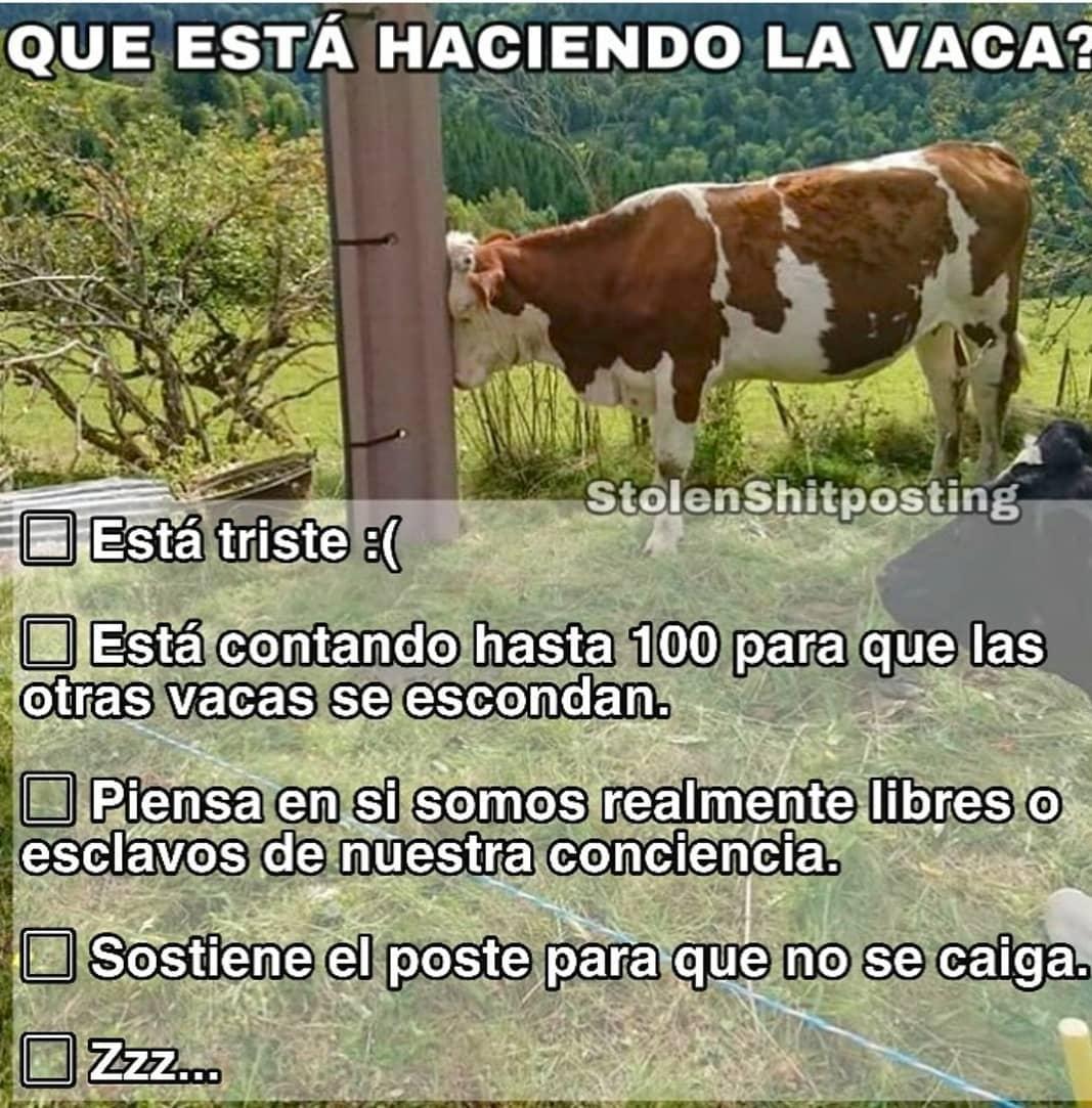 ¿Qué hace la vaca?