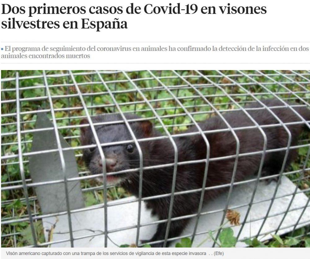 ¿Se viene otro holocausto de visones a la española?