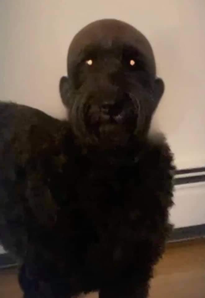 Nunca le afeites la cabeza a tu perro
