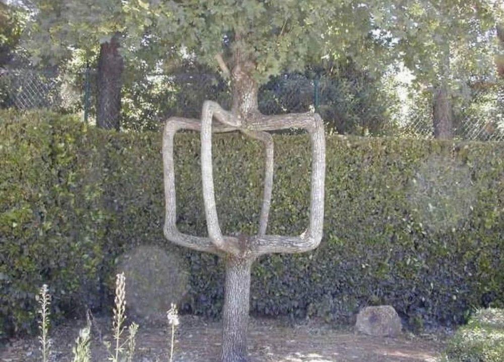 Profesora: dibujad vuestro árbol genealógico