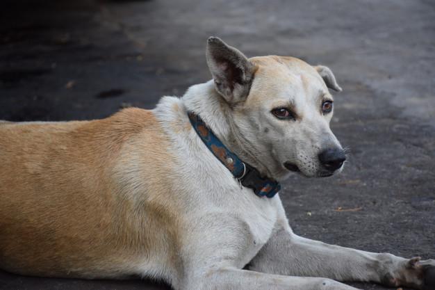 Un finolier ve todos los días cómo un perro malvive en una terraza, y necesita ayuda del consejo de sabios