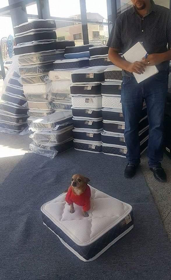 Una fábrica de colchones en EE.UU te regala una colchón en miniatura para mascotas por la compra de un colchón normal