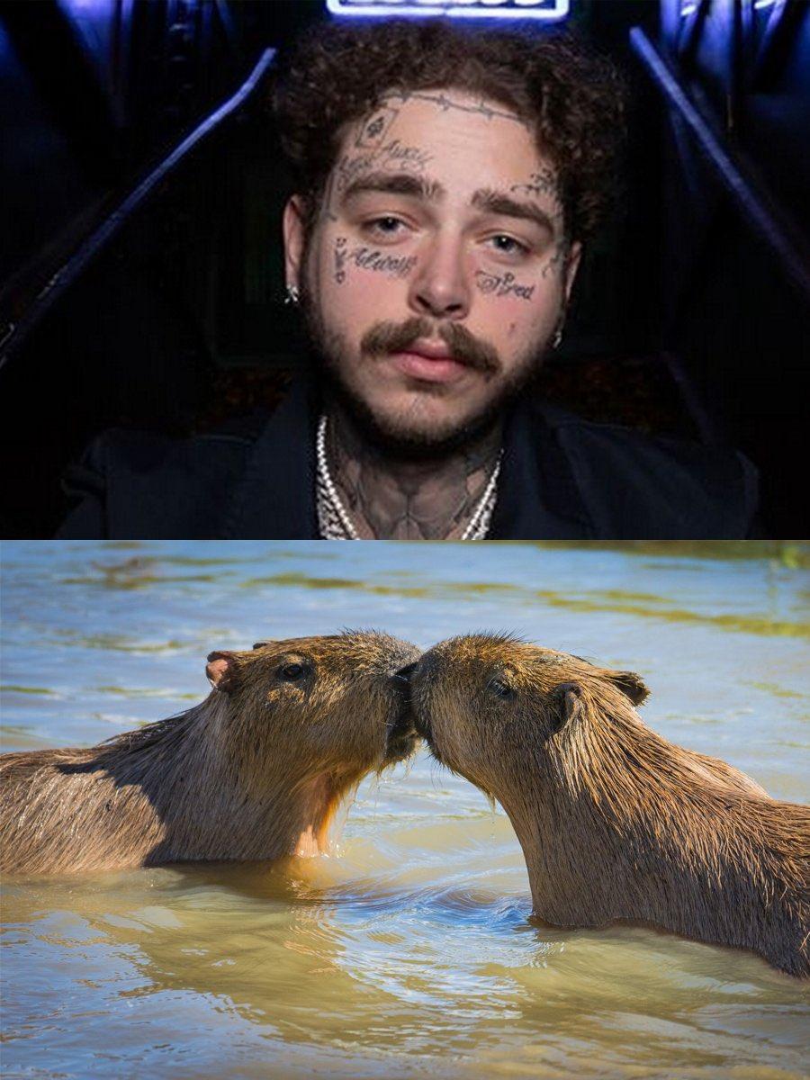 Su mostacho parecen dos Capibaras besándose