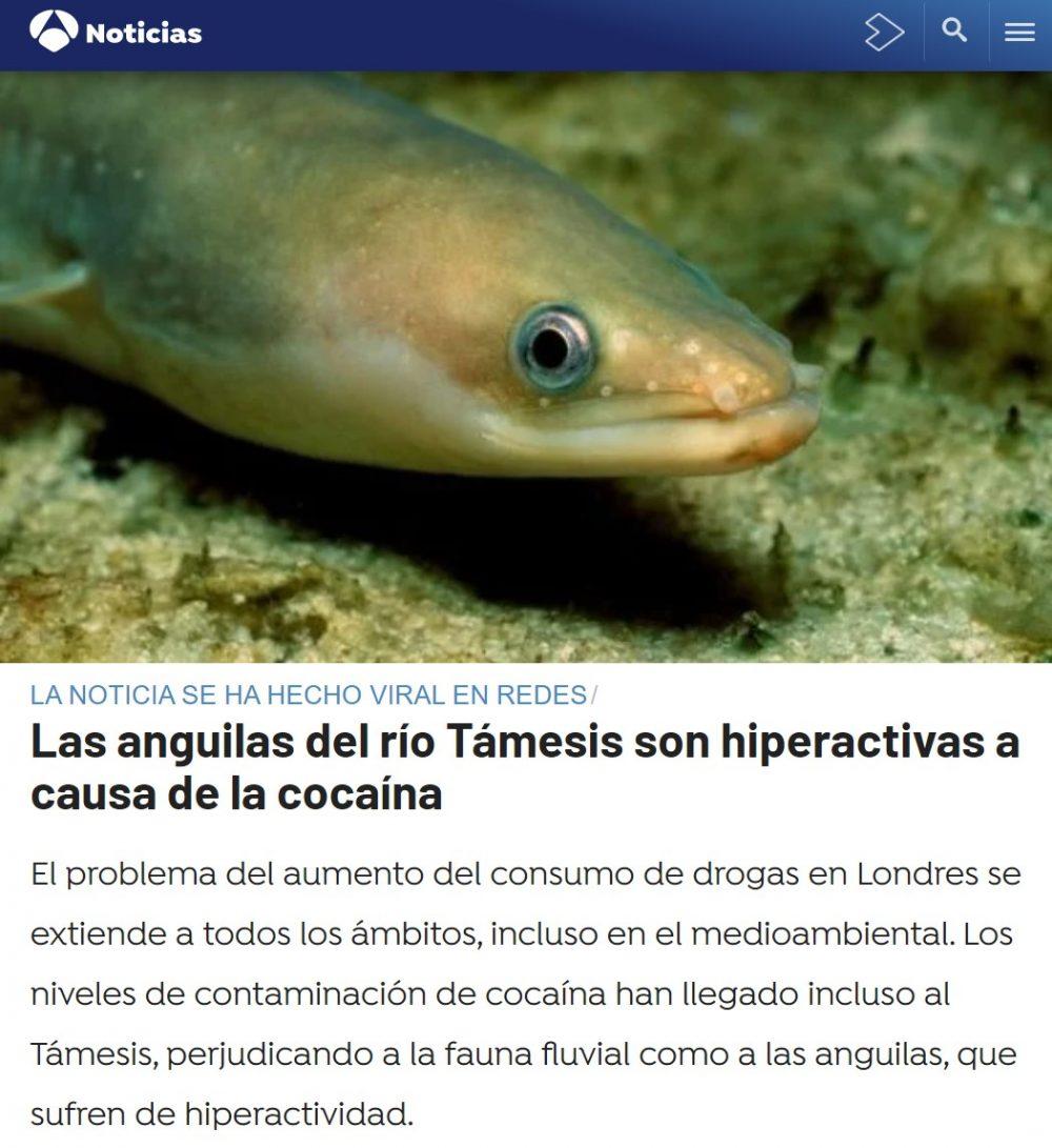 Pipi, paga el psicólogo de las anguilas, primer aviso