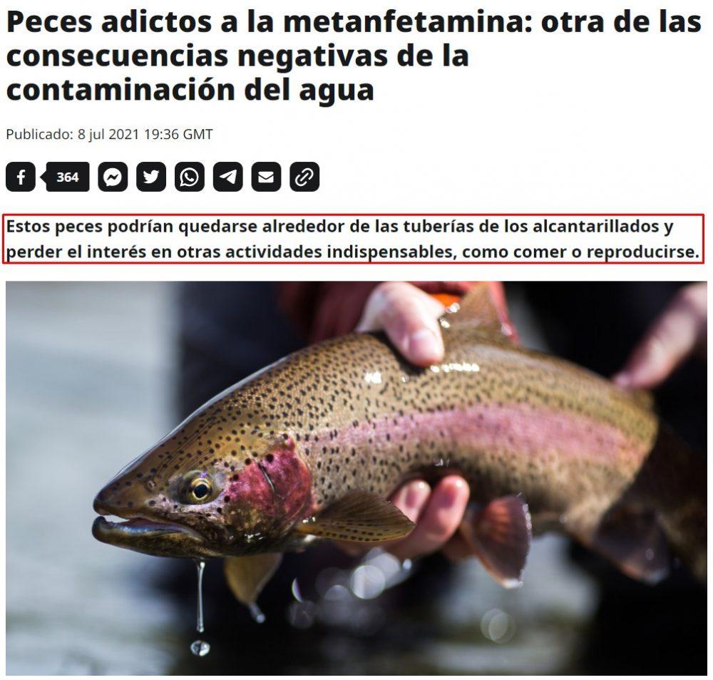 Los peces se están adaptando a la vida moderna