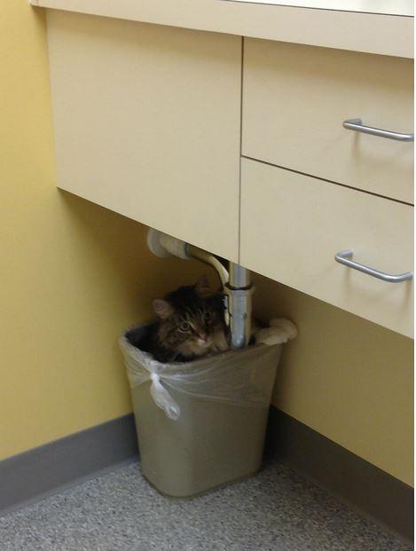 Parece que a los gatos no les gusta mucho eso de ir al veterinario...