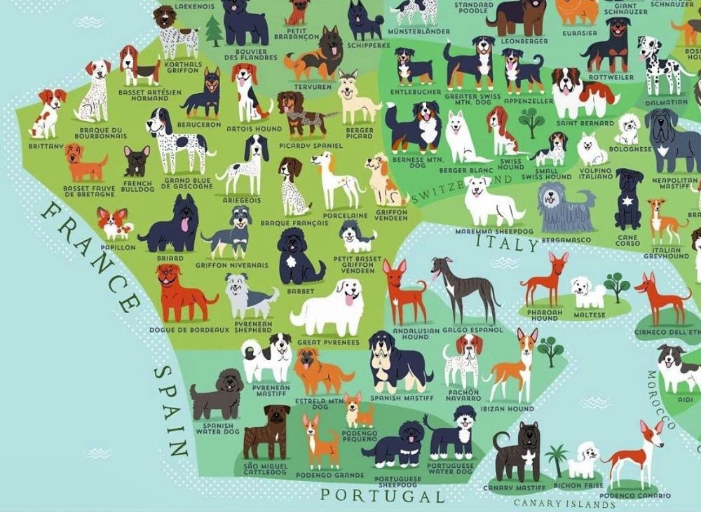 Razas de perros y sus países de origen