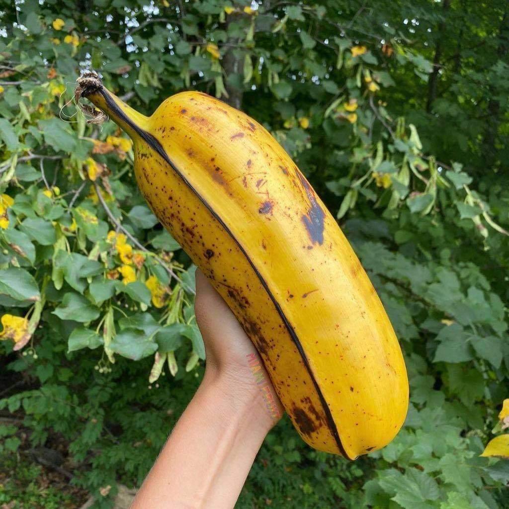 Bananacho Vidal