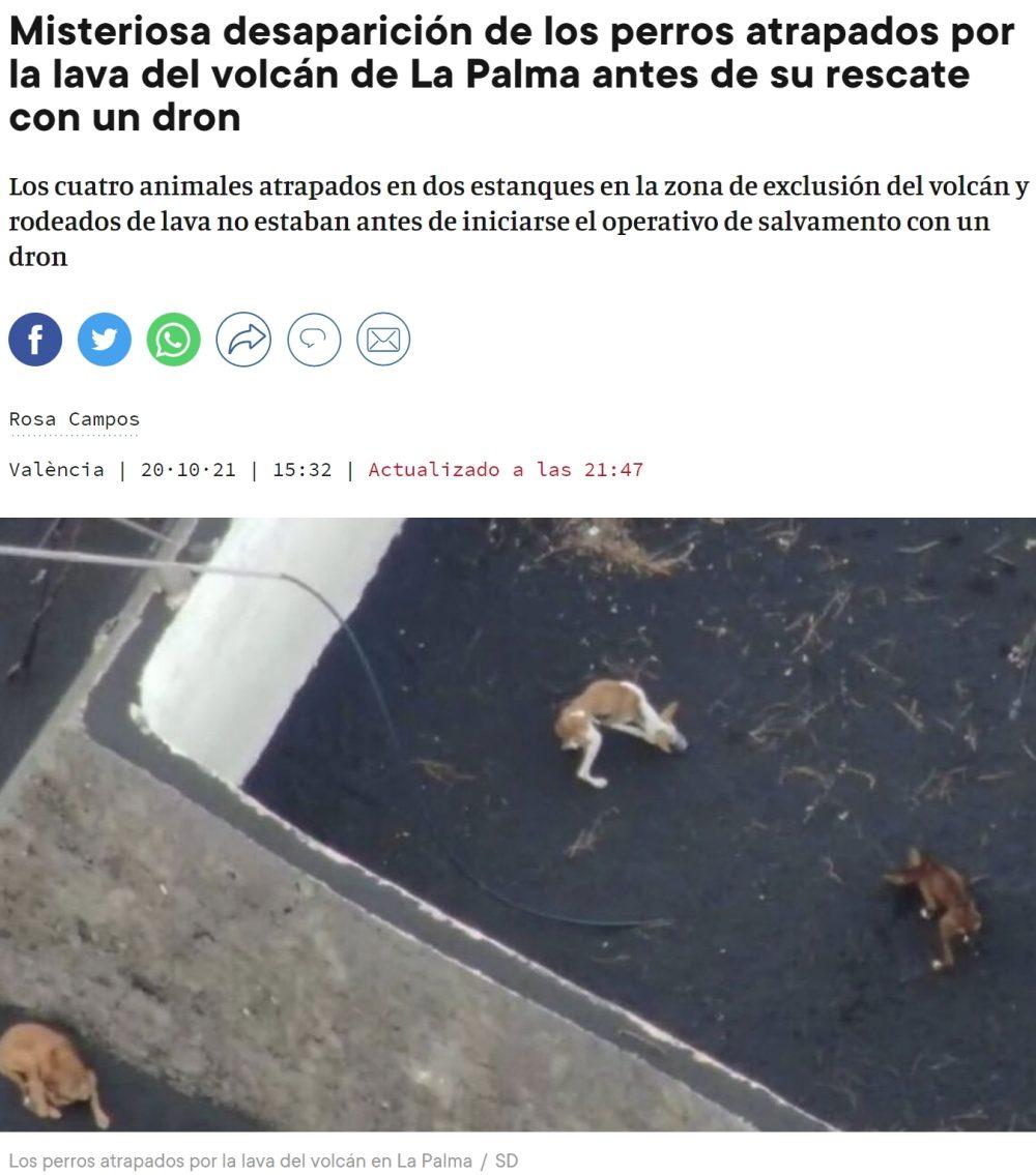 Desaparecen los perros que iban a ser rescatados con drones: ¿Capachao?