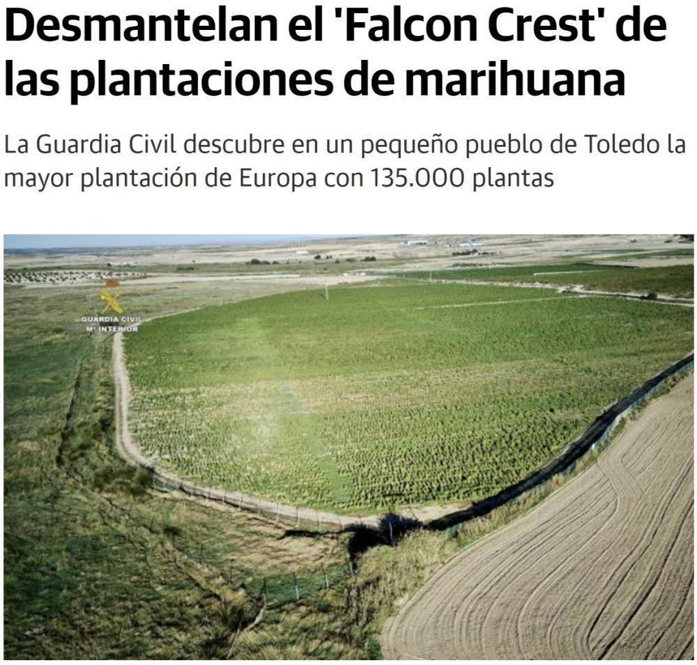 Desmantelan una plantación con 135.000 plantas de maría en un pequeño pueblo de Toledo